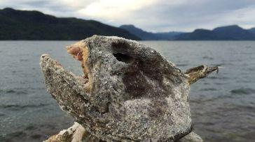 El pez carnívoro del Ebro