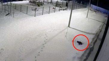 Un niño sobrevive al caer desde el piso 12