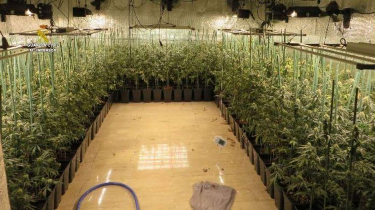 La nueva moda: Plantaciones de marihuana itinerantes