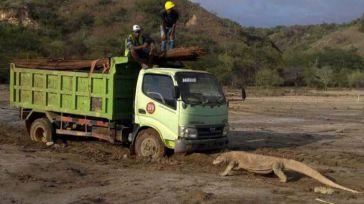 Indonesia prepara su polémico 'Jurassic Park'