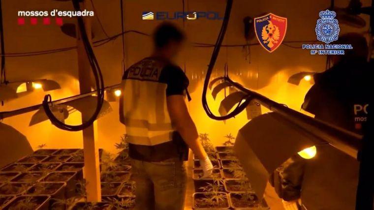 Cae en España una organización criminal con más de 100 detenidos