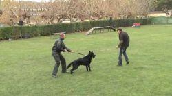 Su perro ayud� en su propio rescate