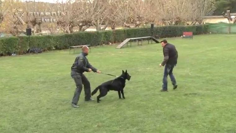 Su perro ayudó en su propio rescate