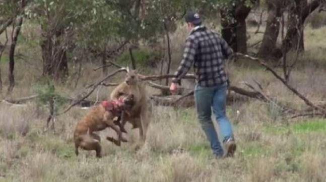 ¿Héroe o maltratador de animales?