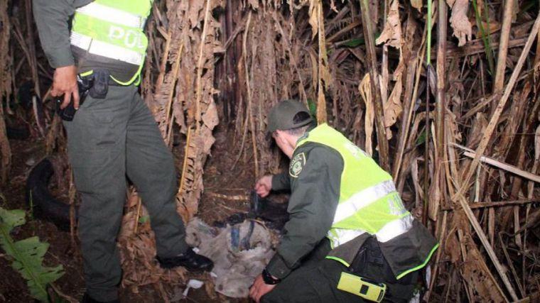 Encuentran en la basura a un bebé lleno de hormigas y tierra