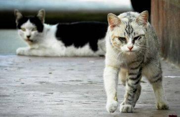 Un gato podría haber intentado asesinar a una mujer en Japón