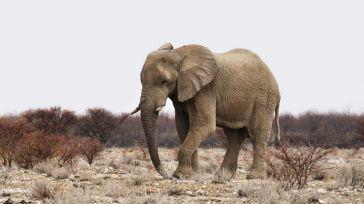 [Video] Un elefante le aplasta tras acercarse demasiado para fotografiarle